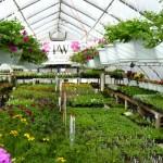greenhouse042