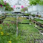 greenhouse2004
