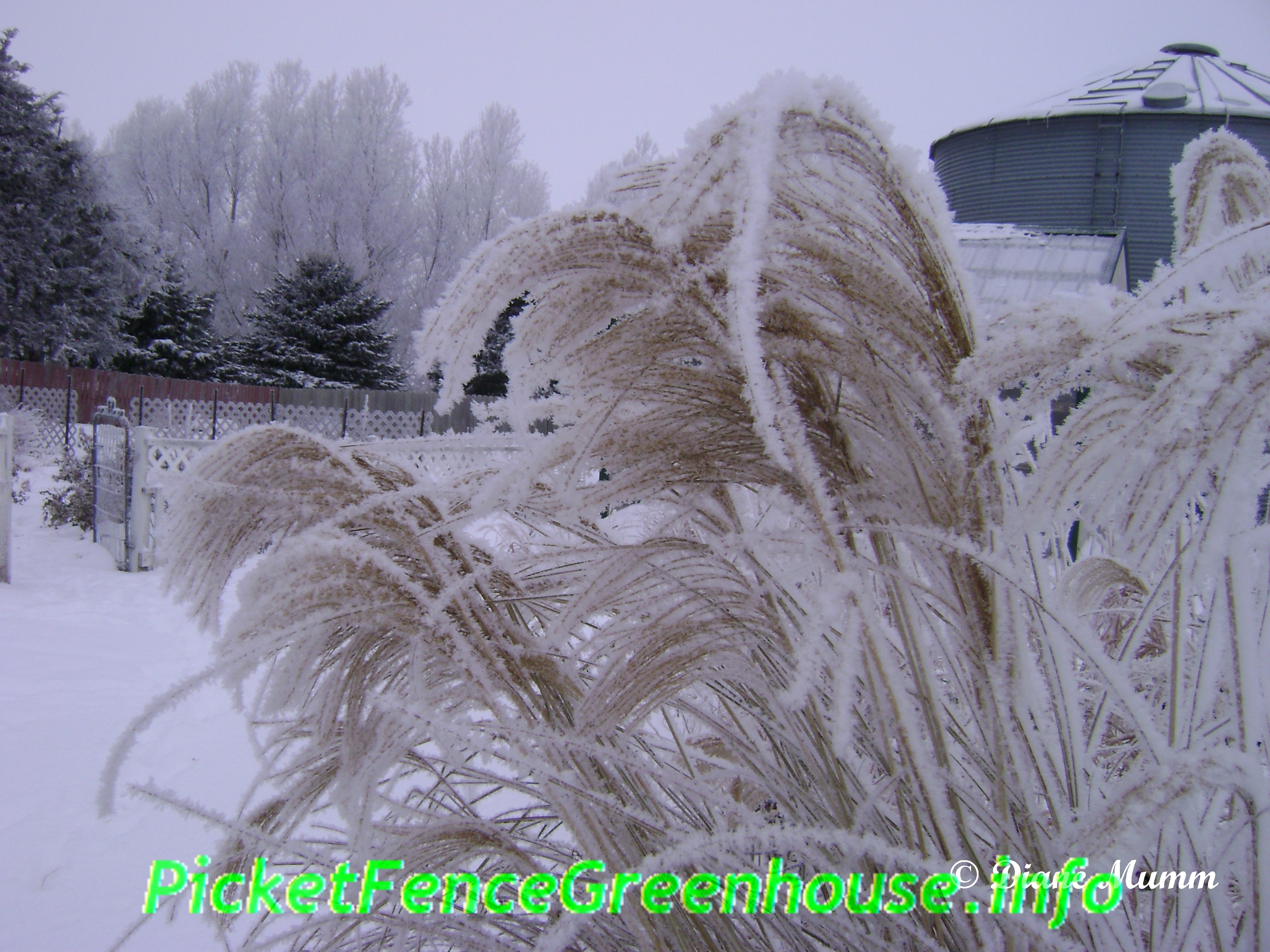 Annual Ornamental Grasses Ornamental grasses ornamental grasses workwithnaturefo