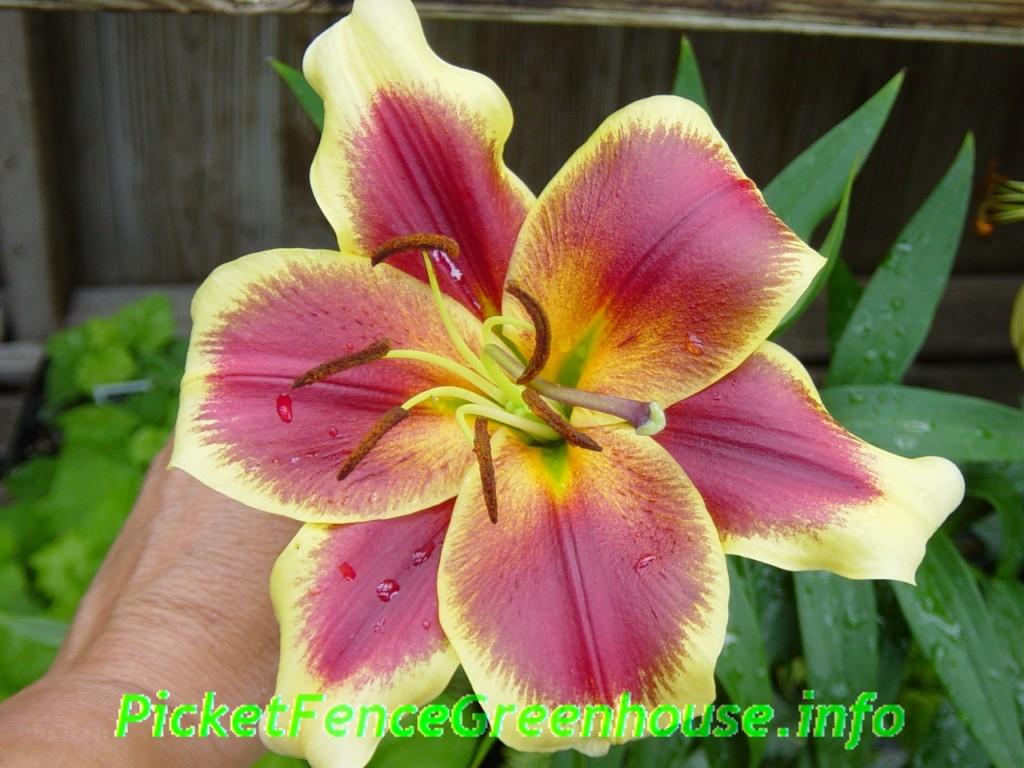 Diane s plant list picket fence greenhouse gardens
