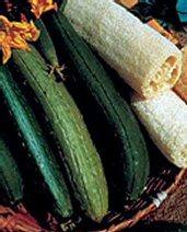 luffa gourd seeds